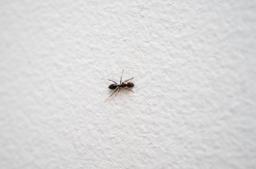 【方法1】蟻用の毒餌を使用する
