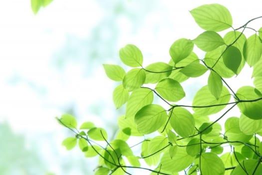 【1】葉の裏に密集している