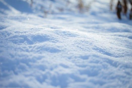 マダニが冬に発生する理由