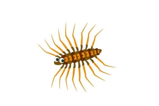 【1】ゲジゲジはゴキブリを食べてくれる