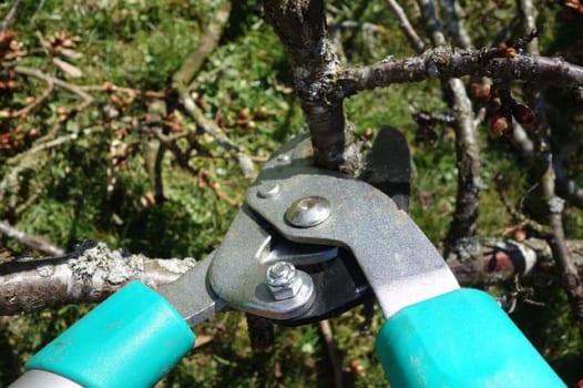 【1】枝木の剪定をおこなう