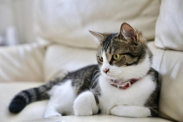 アロマやハーブも猫にとっては害