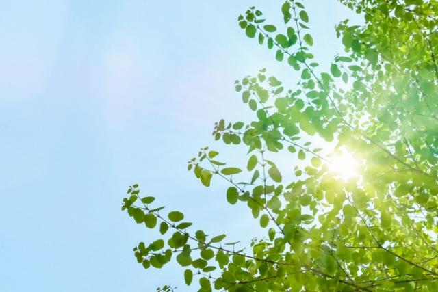 夏のコバエは発生源を知って対策しよう!効果的な駆除方法も紹介