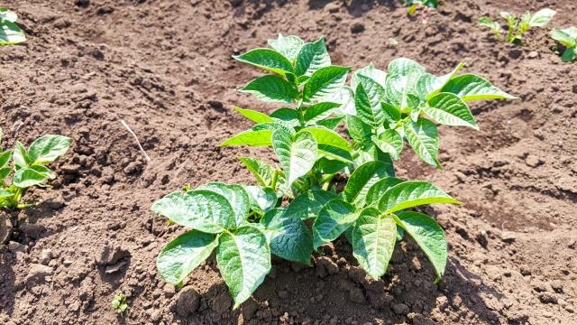 【対策1】植物がある場合はきちんと管理する