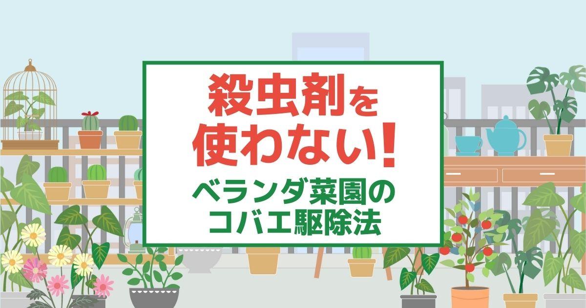 殺虫剤を使わない! ベランダ菜園のコバエ駆除法
