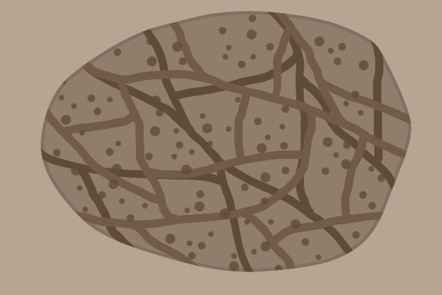 イエシロアリ 本巣 球体