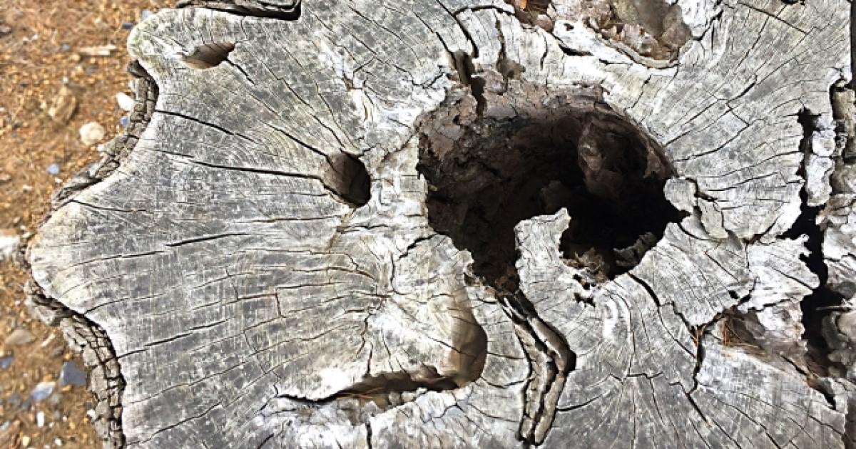 ヤマトシロアリの生態や駆除方法とは?イエシロアリとの違いも解説!