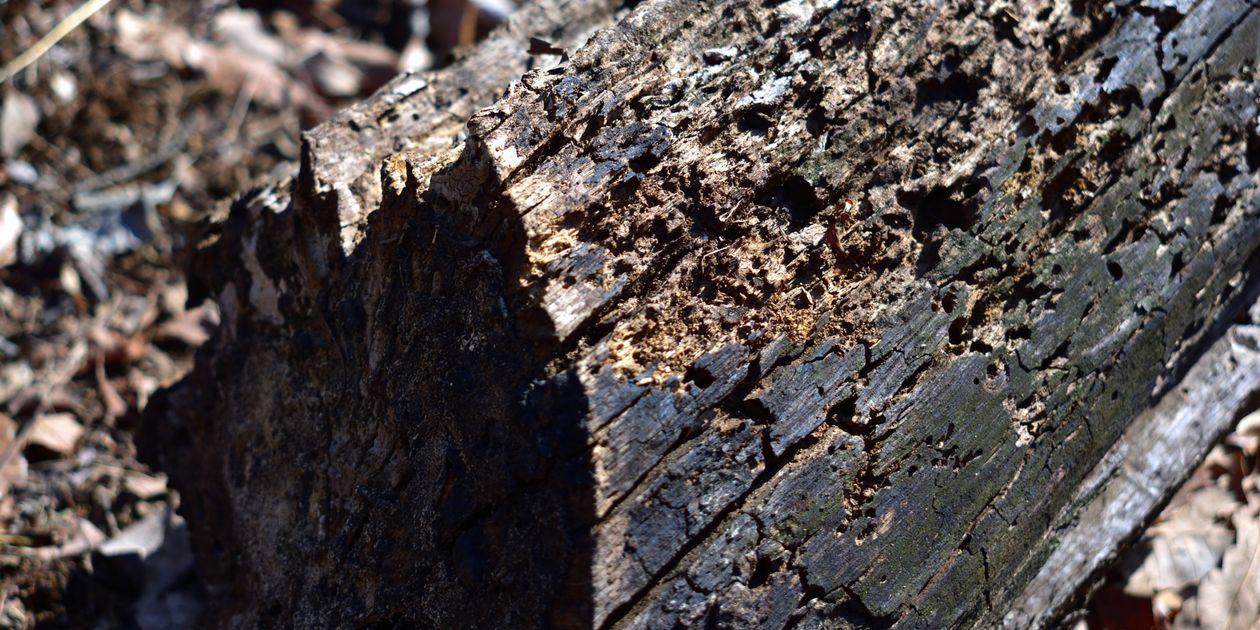シロアリの巣は種類によってさまざま!巣の場所・特徴・探し方・対策