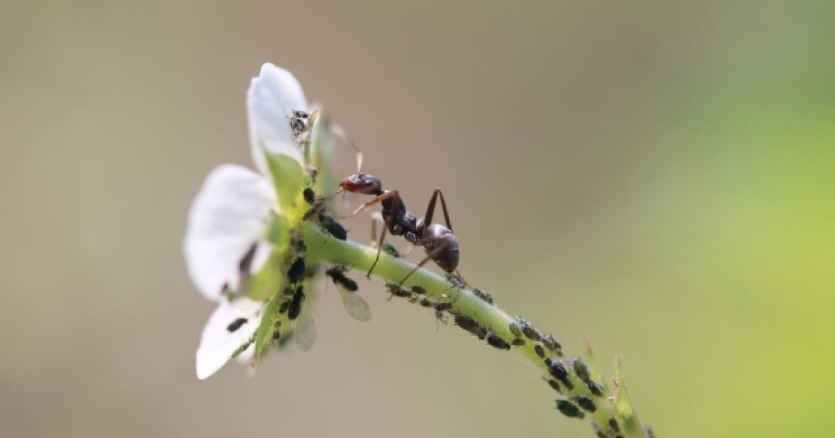 羽アリの種類を見極める方法とは?駆除方法や予防対策についても解説