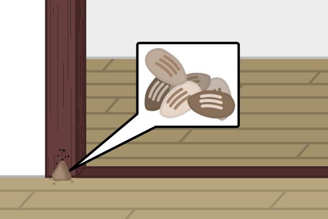 アメリカカンザイシロアリ 巣