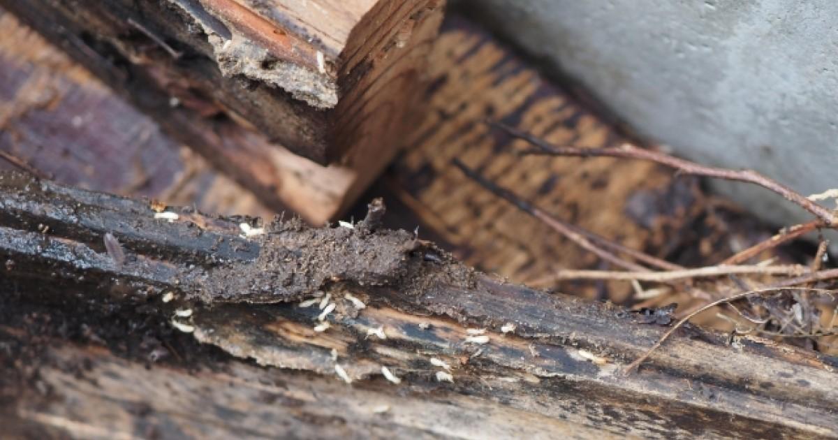 シロアリ被害の特徴