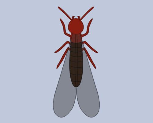 アメリカカンザイシロアリ 羽アリ