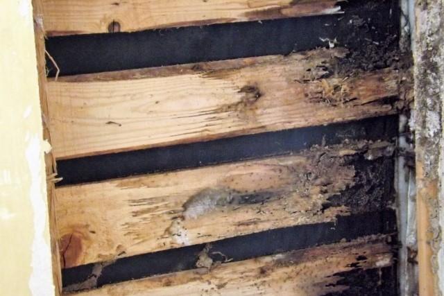蟻道の特徴