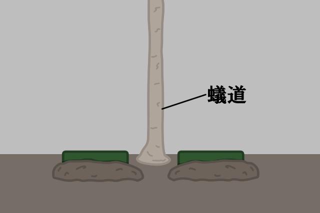 蟻道の近くに埋める場合