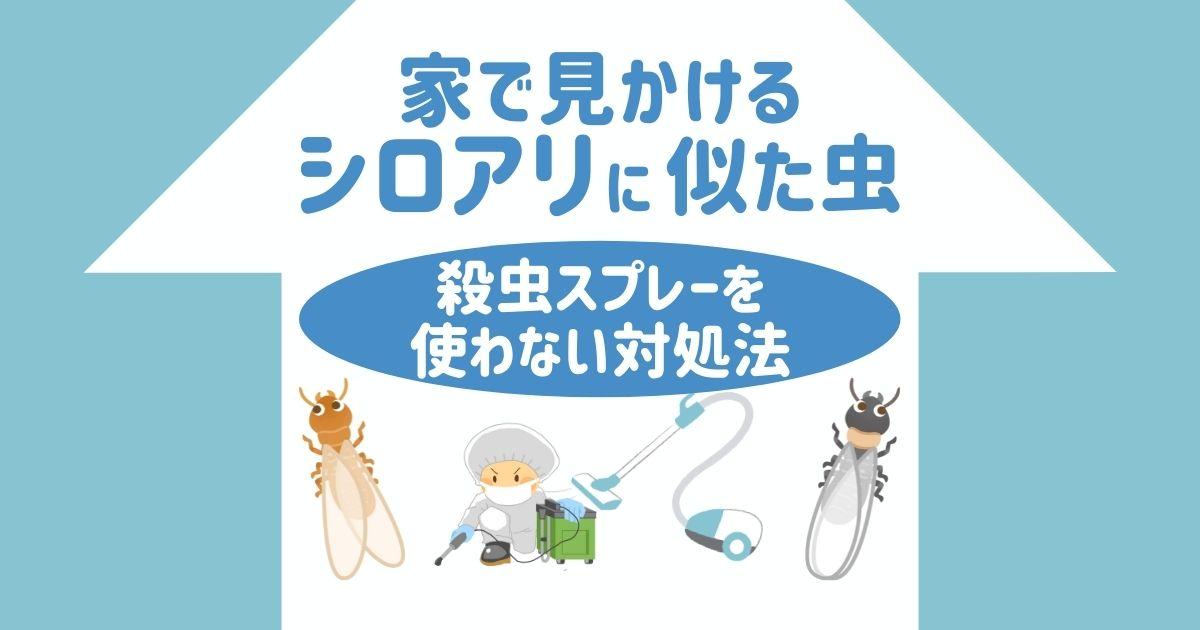 家で見かける シロアリに似た虫 殺虫スプレーを使わない対処法