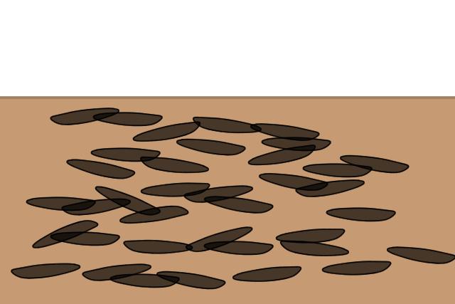 羽アリ 痕跡(アメリカカンザイシロアリ)