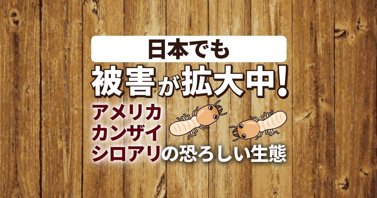 外来種アメリカカンザイシロアリが日本襲来!脅威の生態と被害の特徴