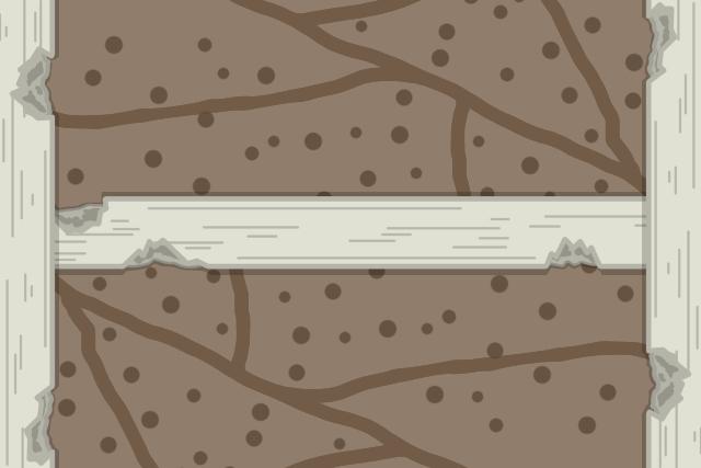 イエシロアリ 分巣