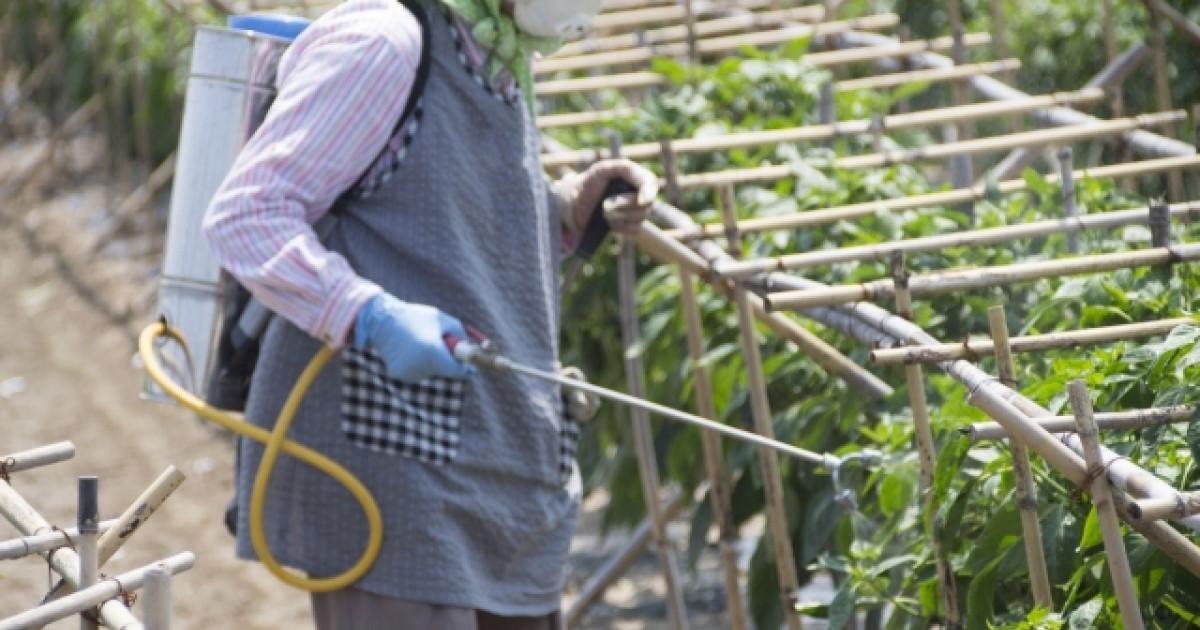 シロアリ駆除で農薬は役に立つ?効果と使い方について解説します!