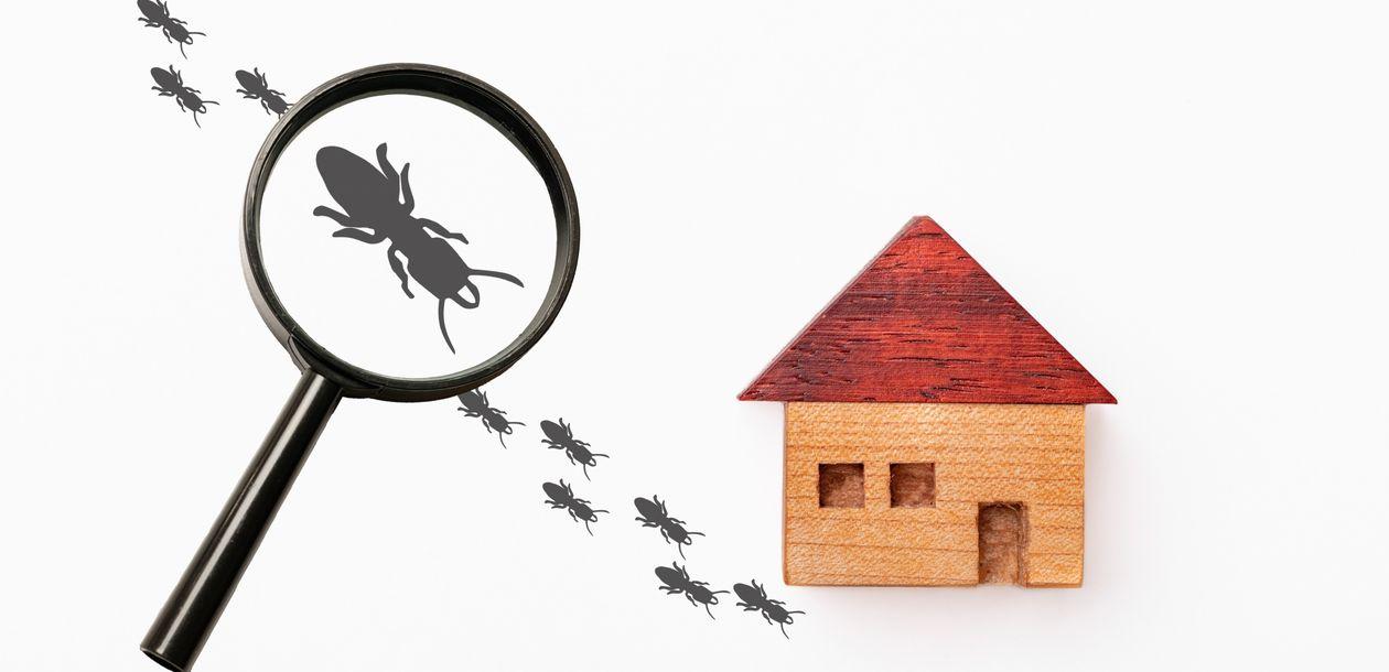 シロアリとゴキブリは実は仲間|見分け方や駆除対策方法の違いを解説
