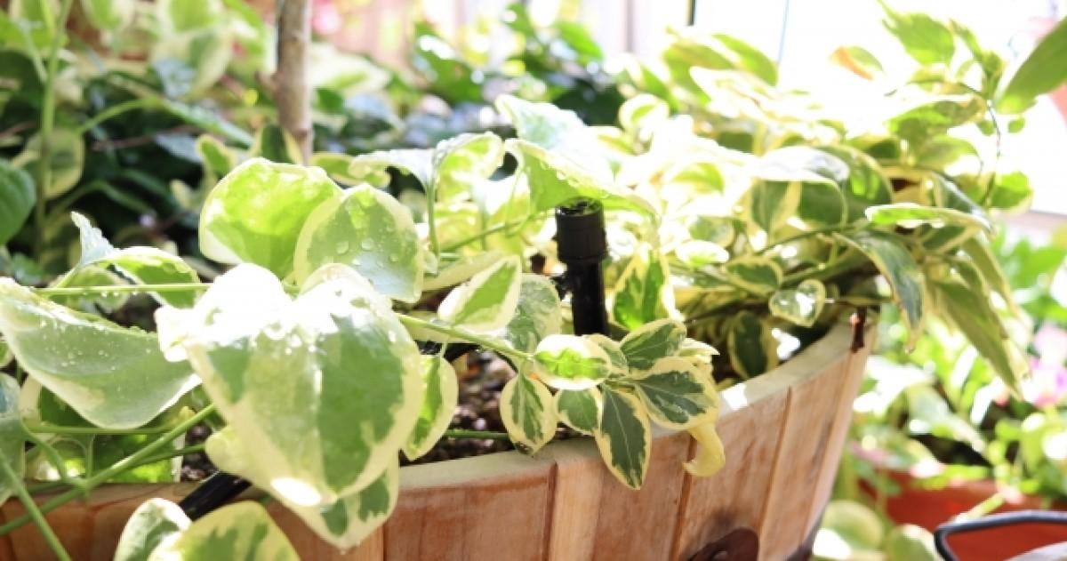 シロアリを植木近くで発見したときすべきこと|対策方法教えます!